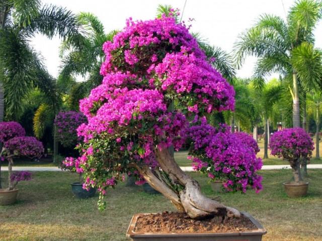 Цветущие растения  Комнатные растения и цветы