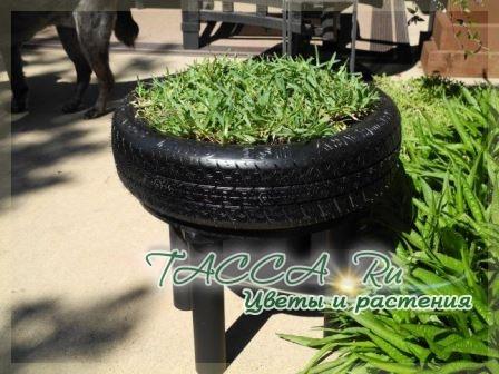 http://www.tacca.ru/images/M_images/flower/garden/tire_001.jpg