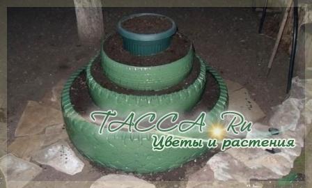http://www.tacca.ru/images/M_images/flower/garden/tire_003.jpg