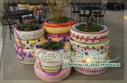 http://www.tacca.ru/images/M_images/flower/garden/tire_005.jpg