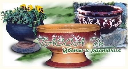 http://www.tacca.ru/images/M_images/flower/garden/tire_007.jpg