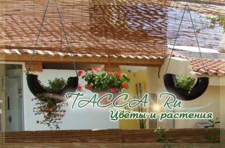 http://www.tacca.ru/images/M_images/flower/garden/tire_008.jpg