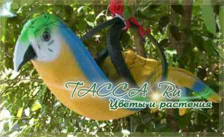 http://www.tacca.ru/images/M_images/flower/garden/tire_010.jpg