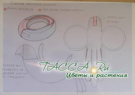 http://www.tacca.ru/images/M_images/flower/garden/tire_011.jpg
