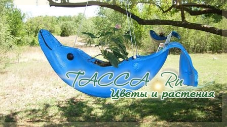 http://www.tacca.ru/images/M_images/flower/garden/tire_012.jpg