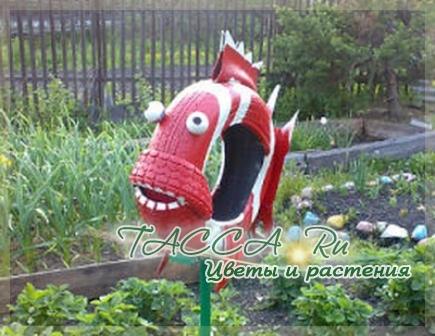 http://www.tacca.ru/images/M_images/flower/garden/tire_013.jpg