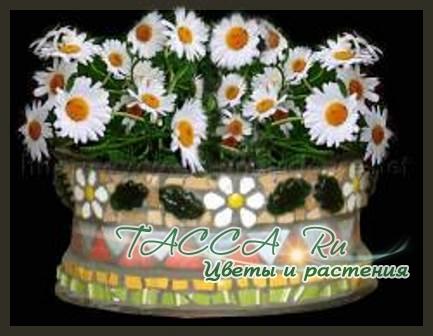 http://www.tacca.ru/images/M_images/flower/garden/tire_015.jpg