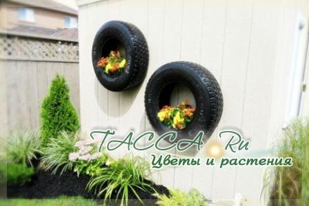 http://www.tacca.ru/images/M_images/flower/garden/tire_016.jpg