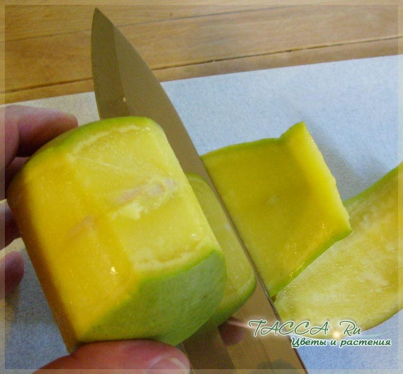 как посадить косточку манго