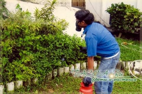 Средства биологической защиты растений против вредителей.