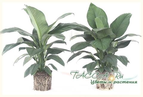 Кокосовый субстрат для растений