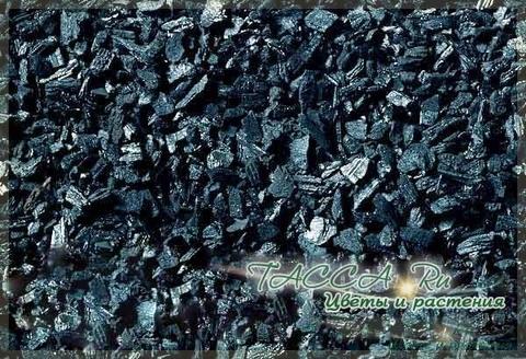 Древесный уголь для растений