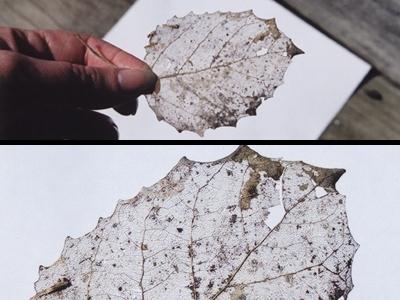 Листовая земля. Что это?