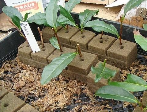 Торф, как грунт и почва для растений.