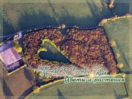 Самые романтичные памятники из растений в честь жен.